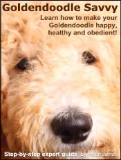 goldendoodle-ebook